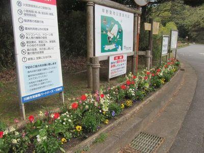 4月15日早野聖地公園1.jpg