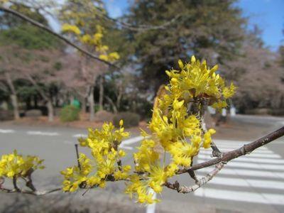 8日多磨霊園2.JPG.jpg